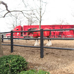 Clydesdales in front of the Anheuser-Busch Brewery in St Louis 03192011b
