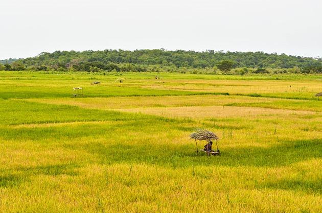 Bissau Guinean Landscape