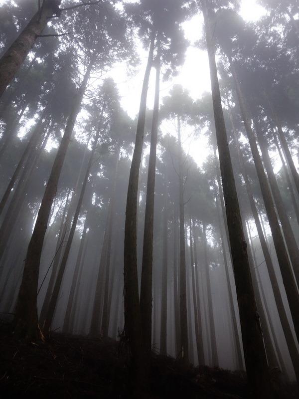 2013_1126-1129 鹿林山-1_131