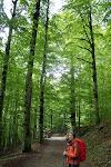 Bosque de Ordesa