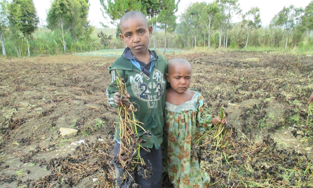 Children at Algi village in Papua New Guinea. In October 2015, PNG is in the midst of what could be its worst drought in close to 20 years. Photo: AAP / Care