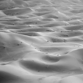 Caravan at Sahara Desert by Alek Kisielewicz - Landscapes Deserts ( blackandwhite, sand, dunes, b&w, caravan, desert, sunset, sahara, travel, morocco, travel photography )