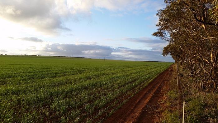 virtù - south australian fields