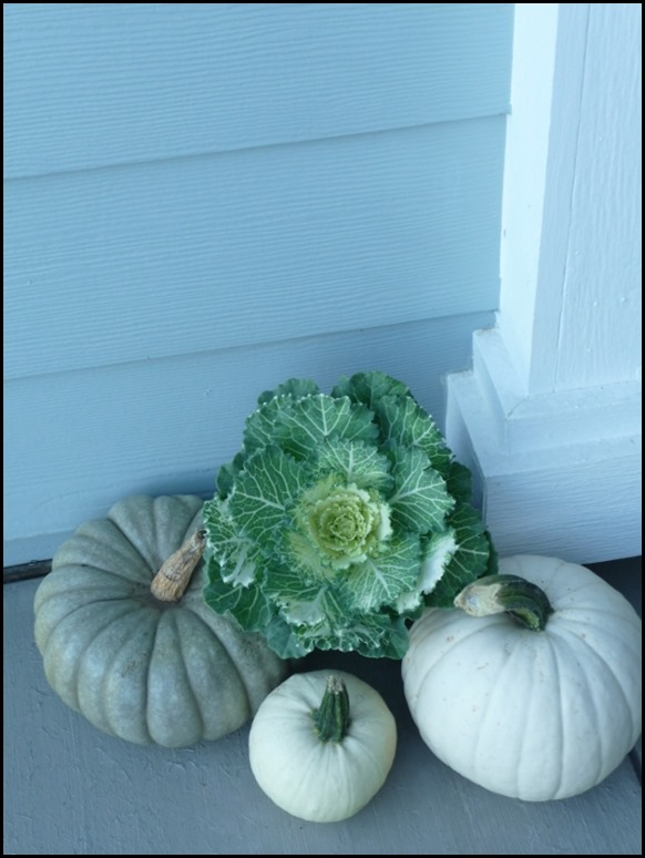 blue and white pumpkins with ornament cabbage (5)