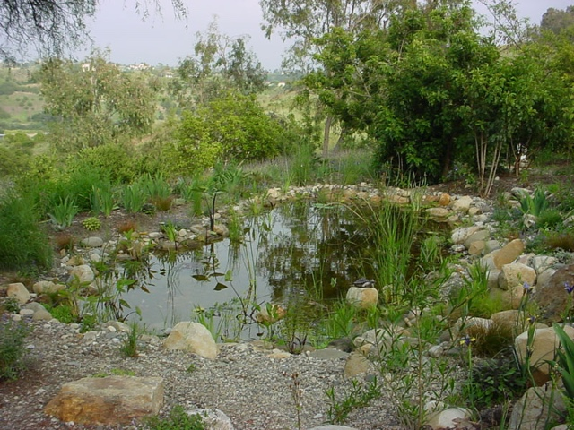 Lillie House Designing A Permaculture Pond Part 2