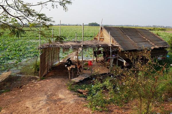 камбоджа хижина лачуга