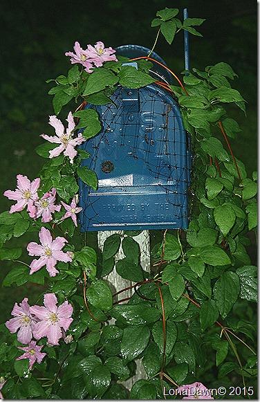 Clematis Rasphody Mailbox