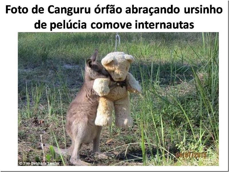Foto de Canguru órfão abraçando ursinho de pelúcia