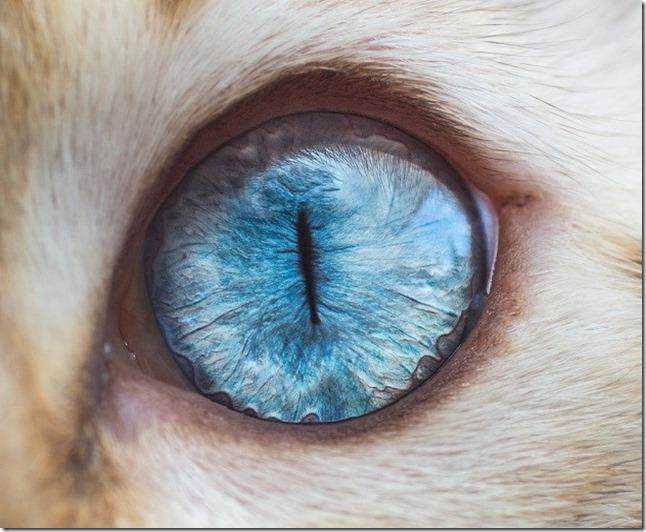 Cats Eyes10