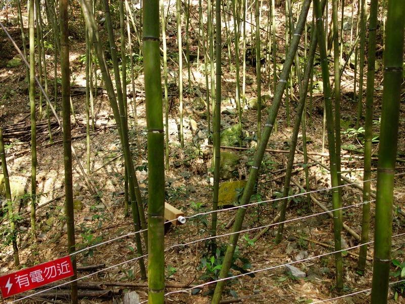 2013_1001-1003 八仙山馬崙山-2_006