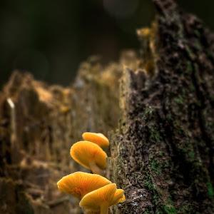 Mushroom Season-1.jpg