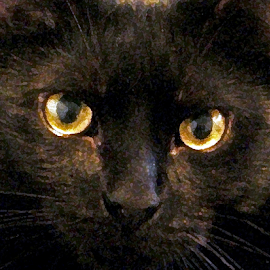 black cat by Edward Gold - Animals - Cats Portraits ( staring look, black cat, yellow eyes, painted look, orange eyes,  )