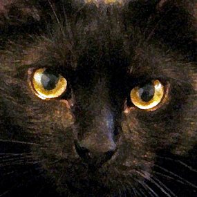 black cat by Edward Gold - Animals - Cats Portraits ( staring look, black cat, yellow eyes, painted look, orange eyes )