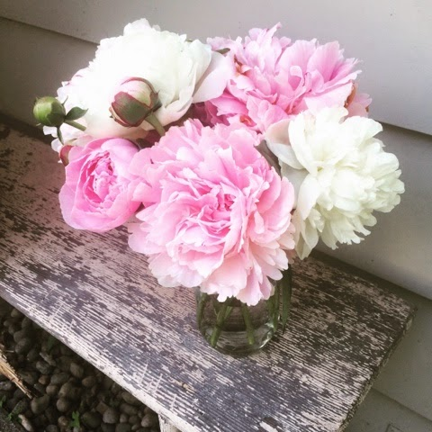 Seattle, Pacific Northwest, Peonies, Gardening