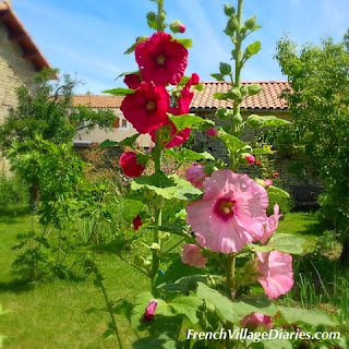 French Village Diaries summer hollyhocks Deux Servres Poitou-Charentes France