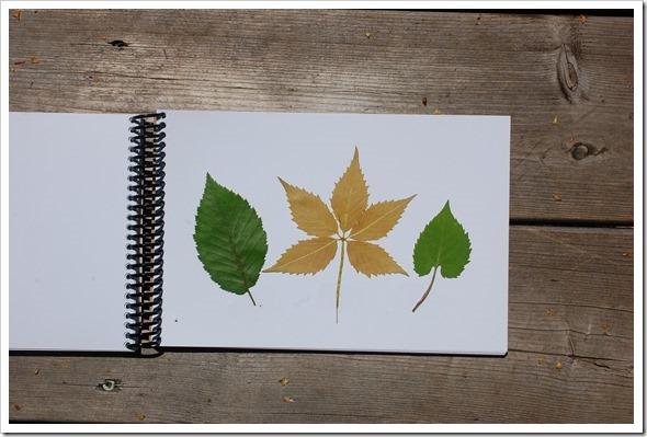 leaf book (5)