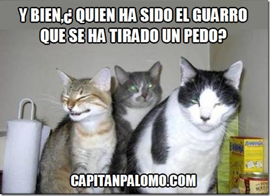 pedo gatos