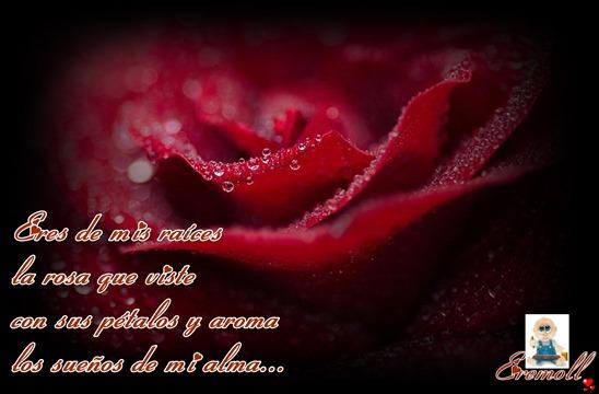 La semilla del amor eremoll
