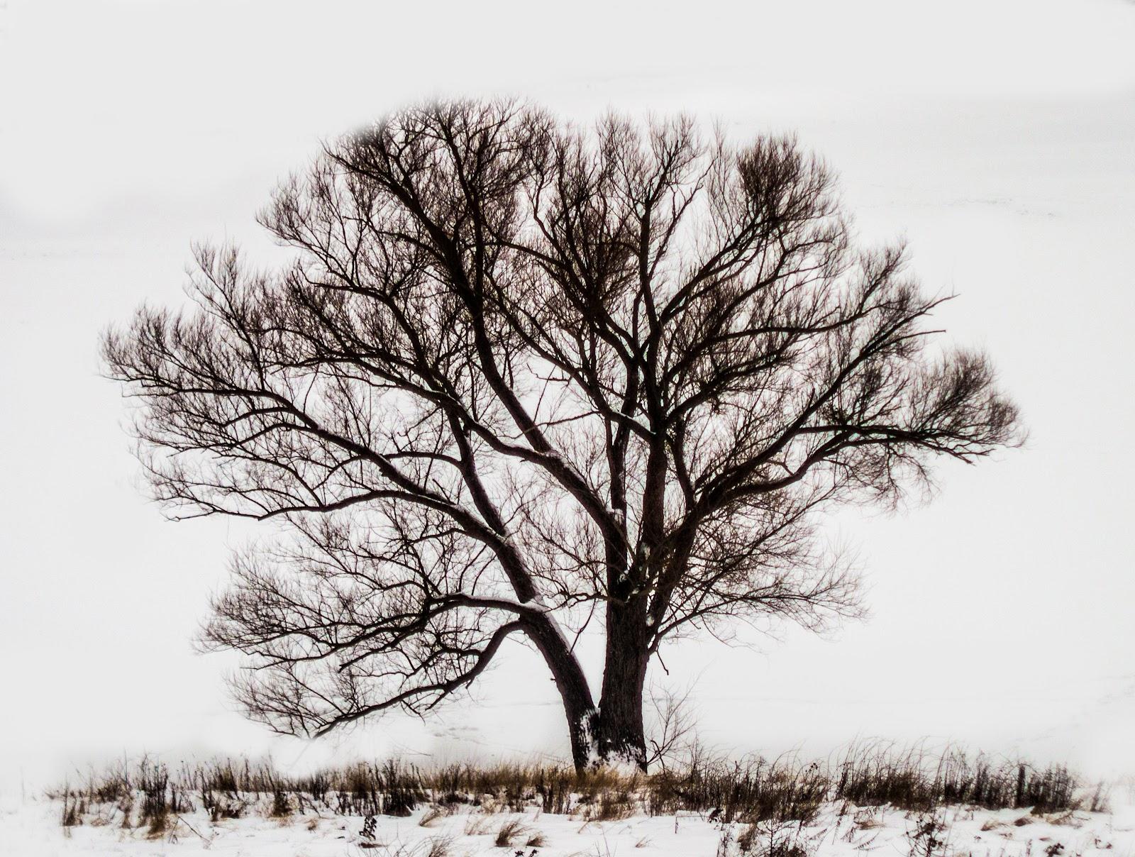 Дерево на пагорбі біля Фастова