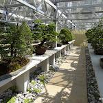 Arboretum de la Vallée-aux-Loups : serre à bonsais