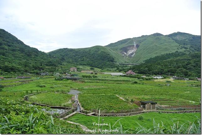 陽明山繡球花 (1)