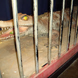 crocodile at circa nightclub in toronto in Toronto, Ontario, Canada