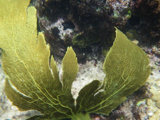 Buck Island Reef - IMGP2341.JPG
