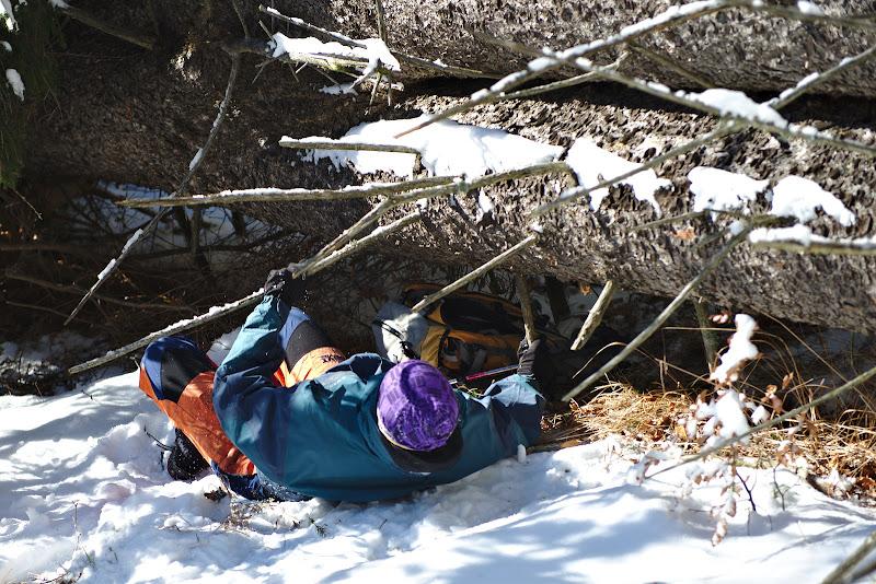 Proba de 100 de metri copaci cazuti.