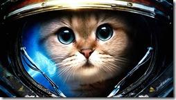 gatos divertidos buscoimagenes (7)