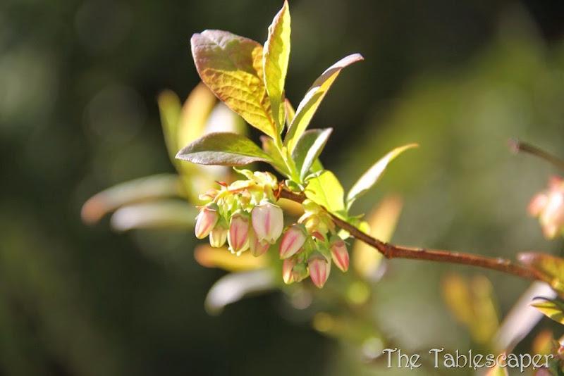 Spring Blossoms4