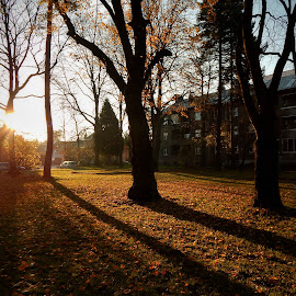 Sunset near my home by Sona Gerekova - City,  Street & Park  Neighborhoods ( park, nature, sunset, trees, shadows )