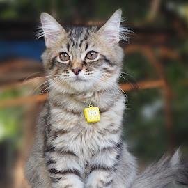 by Iwan Ramawan - Animals - Cats Kittens