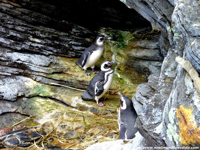 pingüinos-oceanaraio-lisboa.JPG