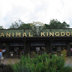 Entering the Animal Kingdom in Disney in FL 06092011
