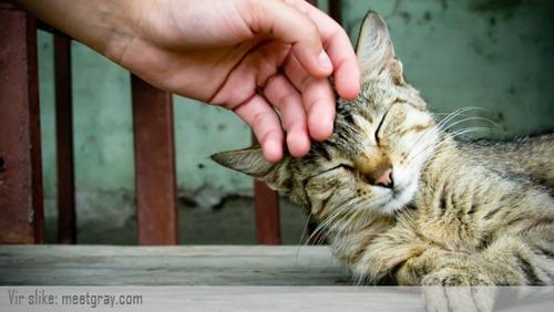 predenje mačk