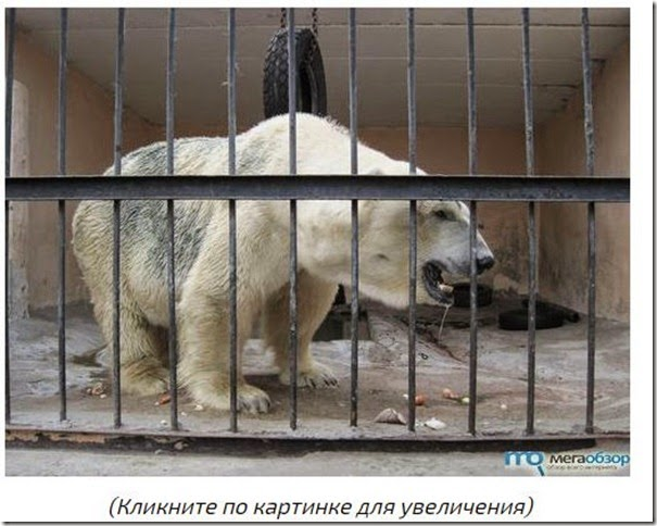 zoo_kazan2