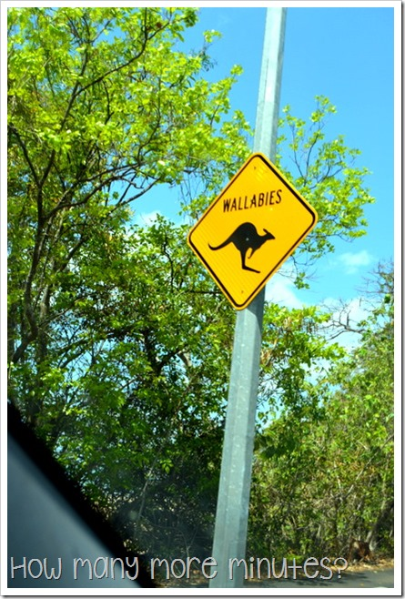 Wallabies Roadsign | How Many More Minutes?
