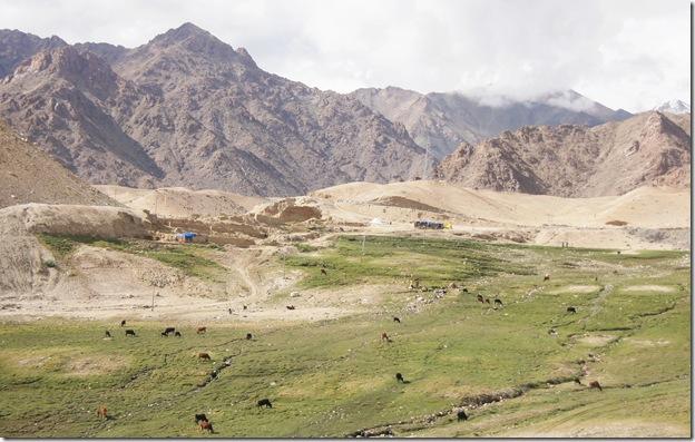 Ladakh236