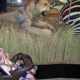 Houston Museum of Natural Science - 116_2772.JPG