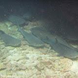 Tubarões - Snorkel no Cerro Brujo - Galápagos
