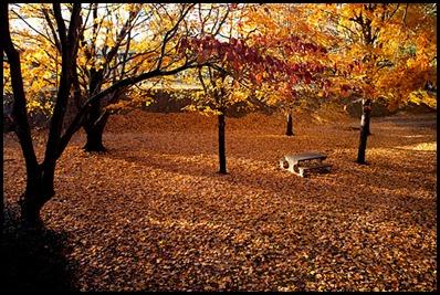 fall GA2