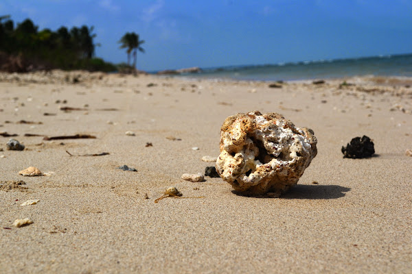 Коралл на берегу Индийского океана, Шри Ланка