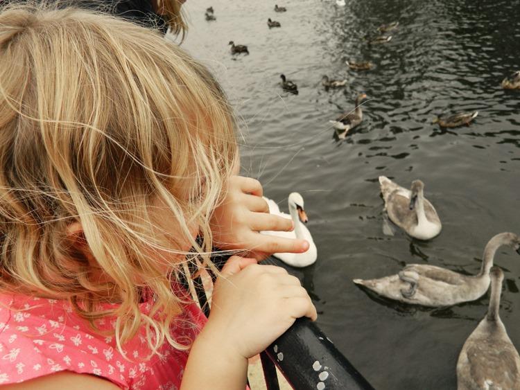 Gracie-swans