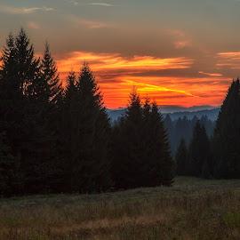 Sunset at Mrkopalj's forest. by Stanislav Horacek - Landscapes Forests