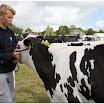 cattle09.jpg