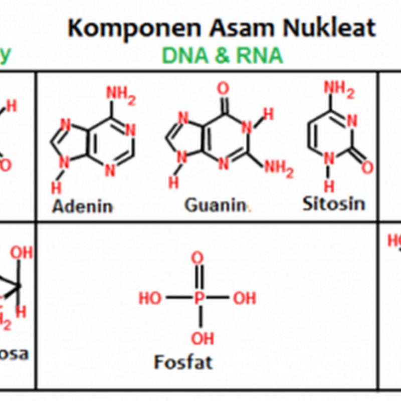 Pengertian dan Fungsi asam nukleat