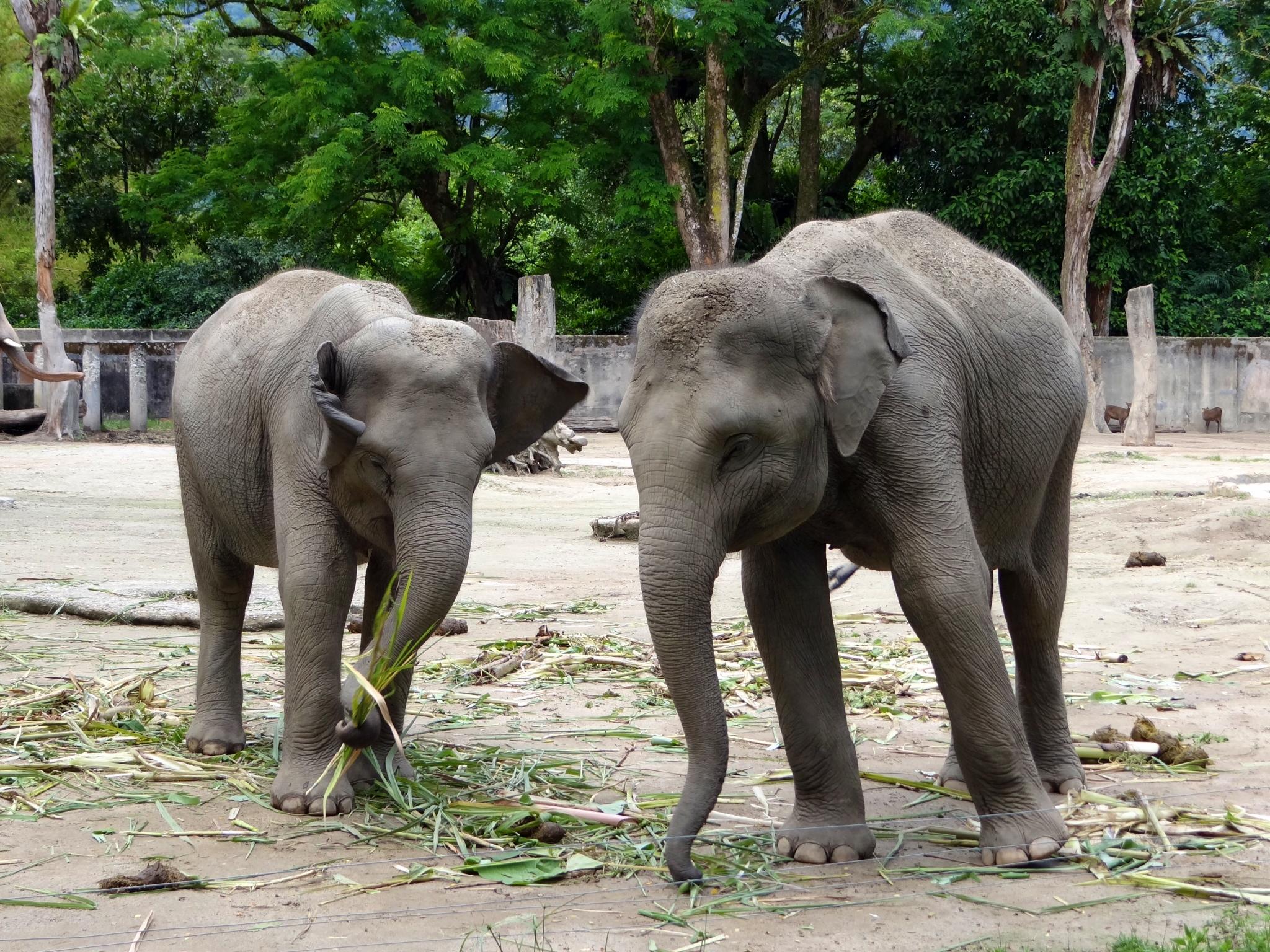 Short Essay On Zoo Animals Decrease Depression