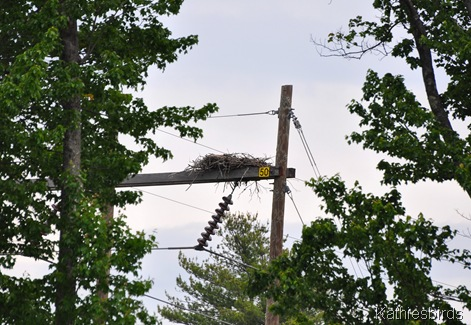 8. osprey nest near Tractor supply-kab