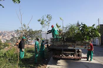 Jd. do Colégio recebe mais de 1.500  árvores
