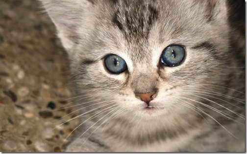 1123cute-cats-wallpapers-background-65